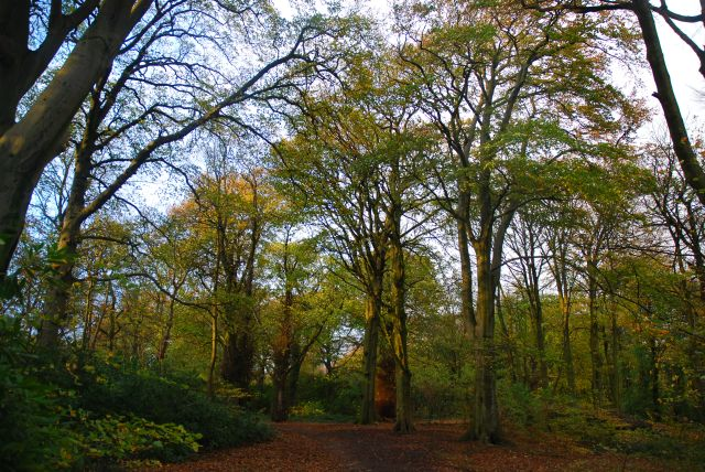 childwall-woods-5
